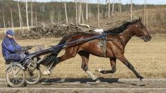 Born Winner som kvalade in till finalen av Uppfödningslöpningen!