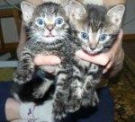 Randi & Tiger