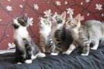 Missys 4 ungar