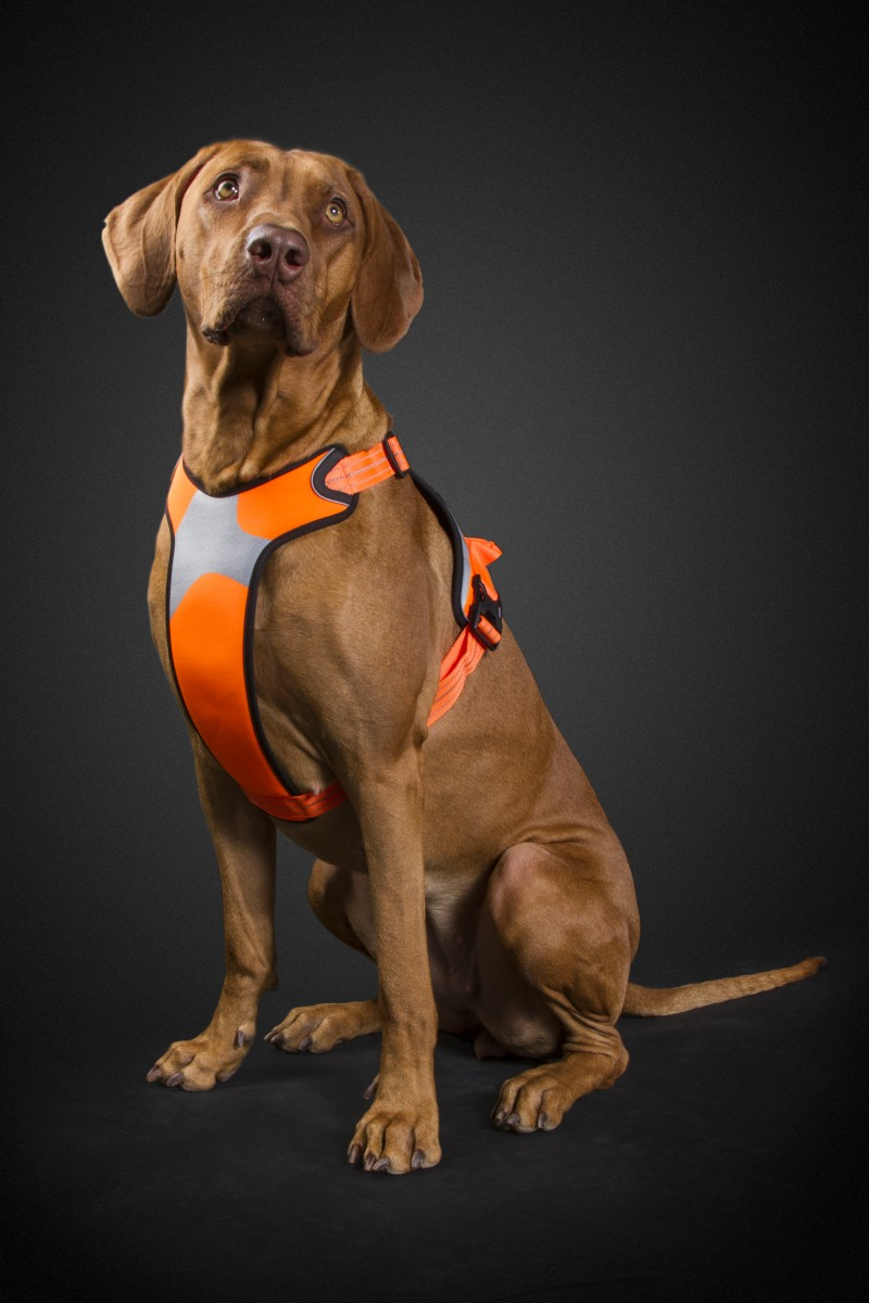 hurtta_lg_visibility_harness_orange_dog