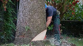 Trädfällning Sundsvall - City Trädsvård Sundsvall