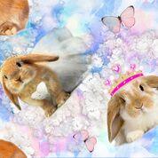 Digitaltryck kanin - Digitaltryck kanin