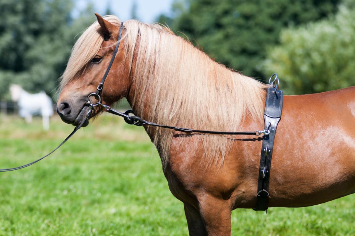 k400_on_horse