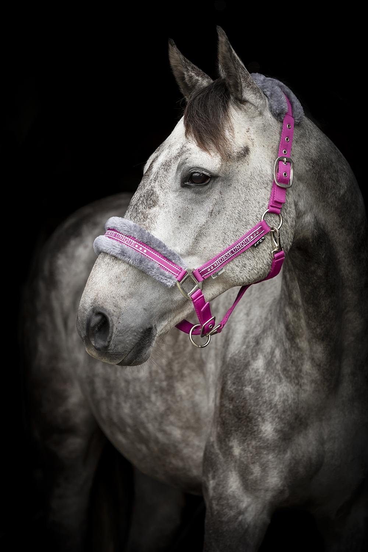 2430-Grimma-Horse-Unique-Cerise
