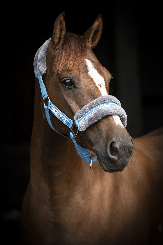 2430-Grimma-Horse-Unique-Medelhavsblå