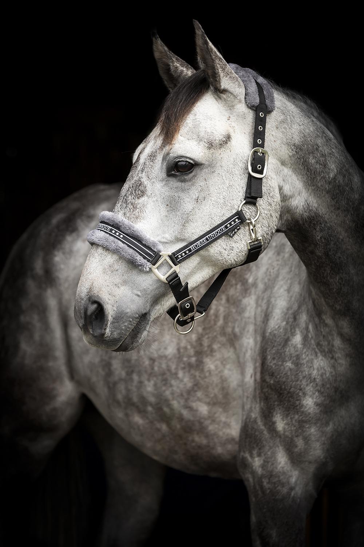 2430-Grimma-Horse-Unique-Svart