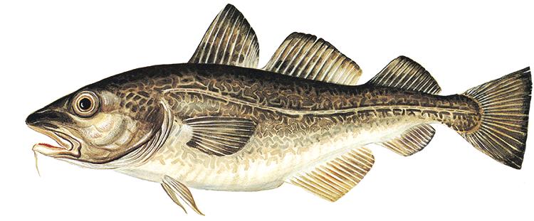 fånga din fisk dating