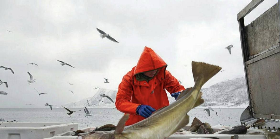 all fisk i havet dating hem sida