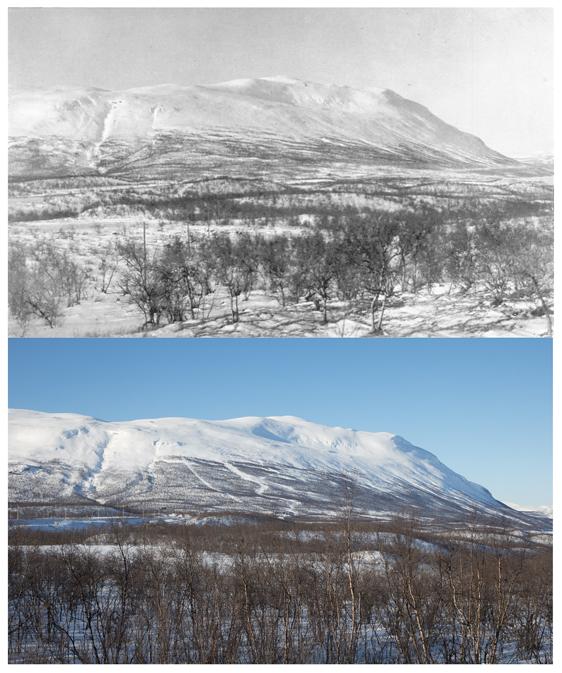 Fjället Nuolja vintertid – notera hur trädlinjen krupit uppåt på 100 år. Övre bilden är från 1921 (Foto: C.G. Alm) och nedre bilden är från 2017 (Foto Oliver Wright). Foto från pressmeddelandet av Umeå universitet.