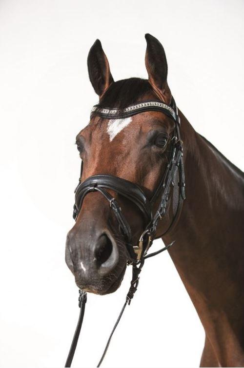 Cavalli Puri träns