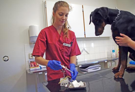 Läs Djursjukvård – Sällskapsdjur på Helsingborgs Ridgymnasium