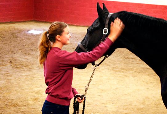 Läs Djursjukvård – Häst på Helsingborgs Ridgymnasium
