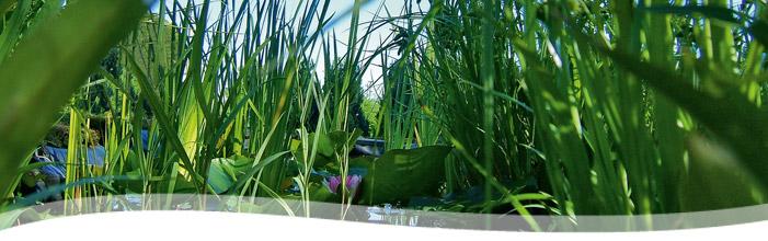 trädgårdsdammar, vattenstenar , trädgårdskons, granitbänkar