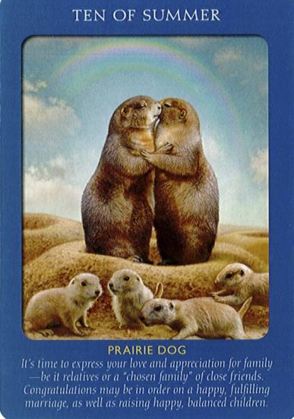 Animal Tarot 9781401951214_4