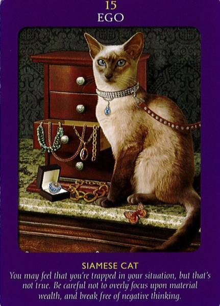 Animal Tarot 9781401951214_5