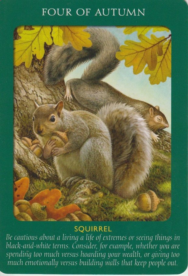 Animal Tarot 9781401951214_6