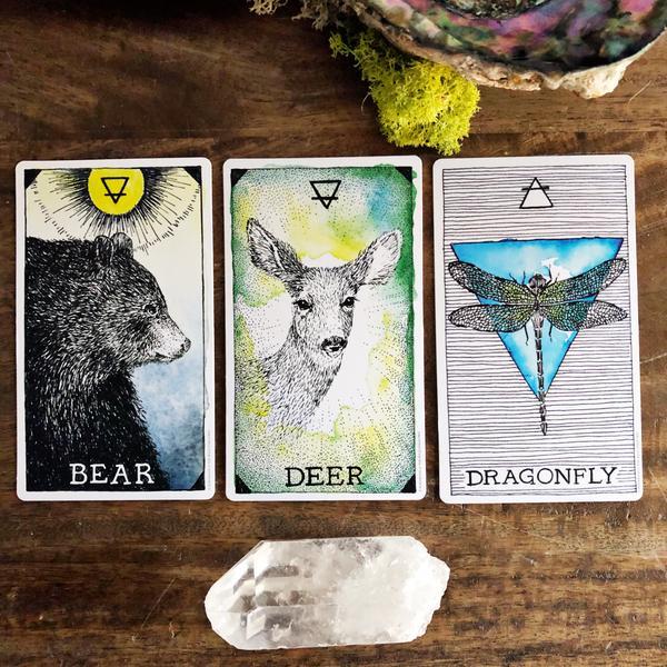 The wild unknow animal spirit 9780062742865_4