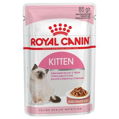 RC_kitten_wetfood