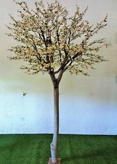 Körsbärsträd med äkta stam 350cm