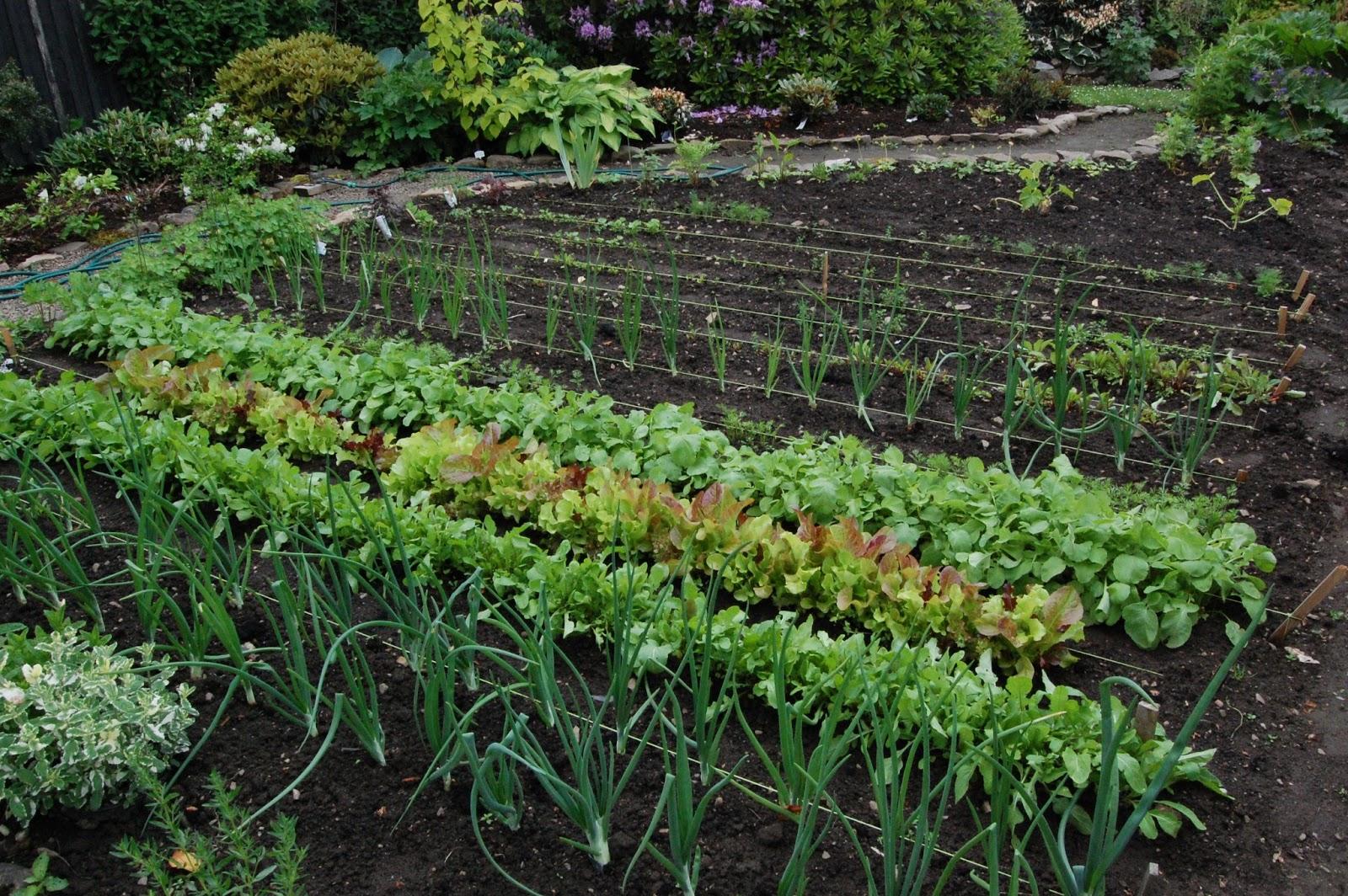 Ett frodigt trädgårdsland med Kuskamatjord