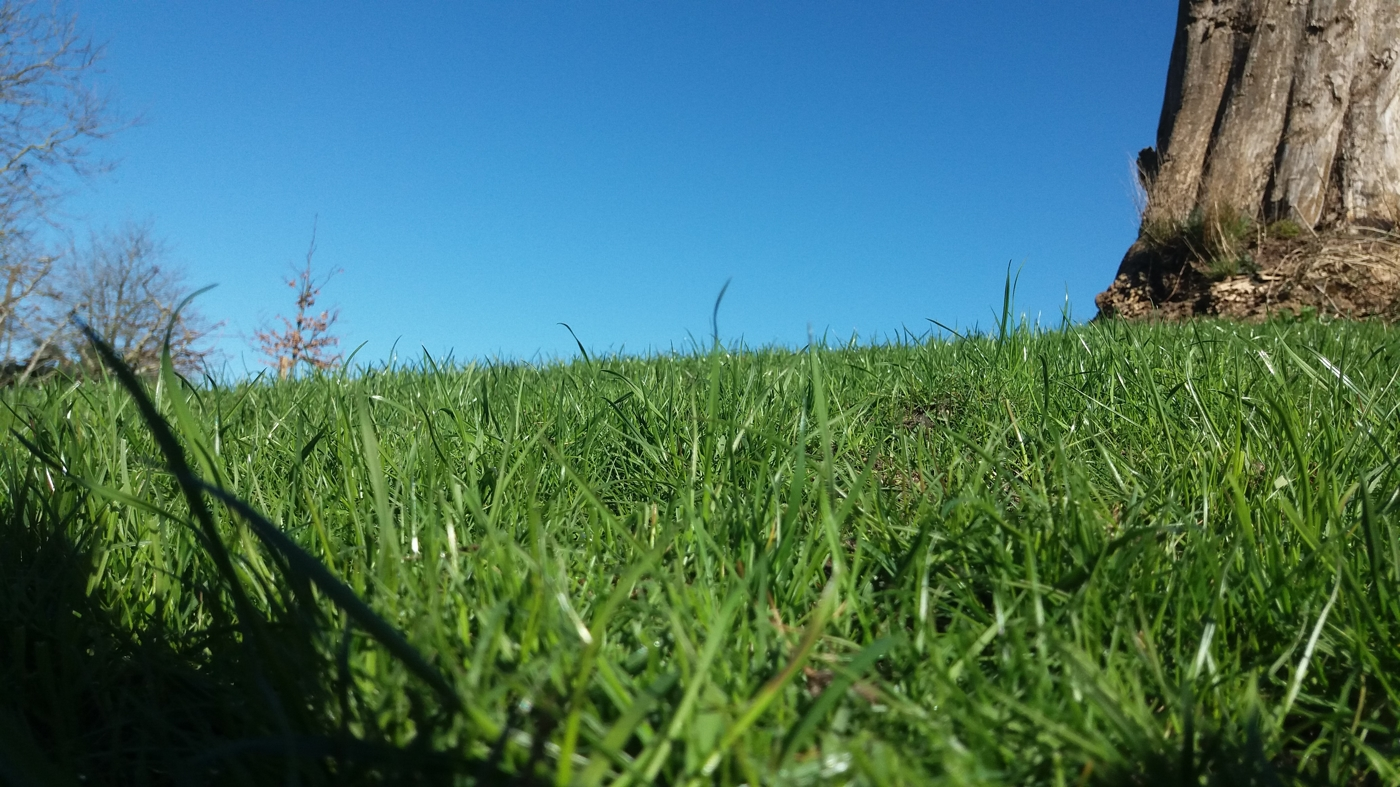 När gräsmattan är några år mår den bra av att toppdressas