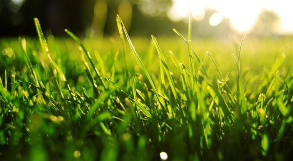 Kuskagräsjord används både om du ska så erller lägga färdiggräsmatta