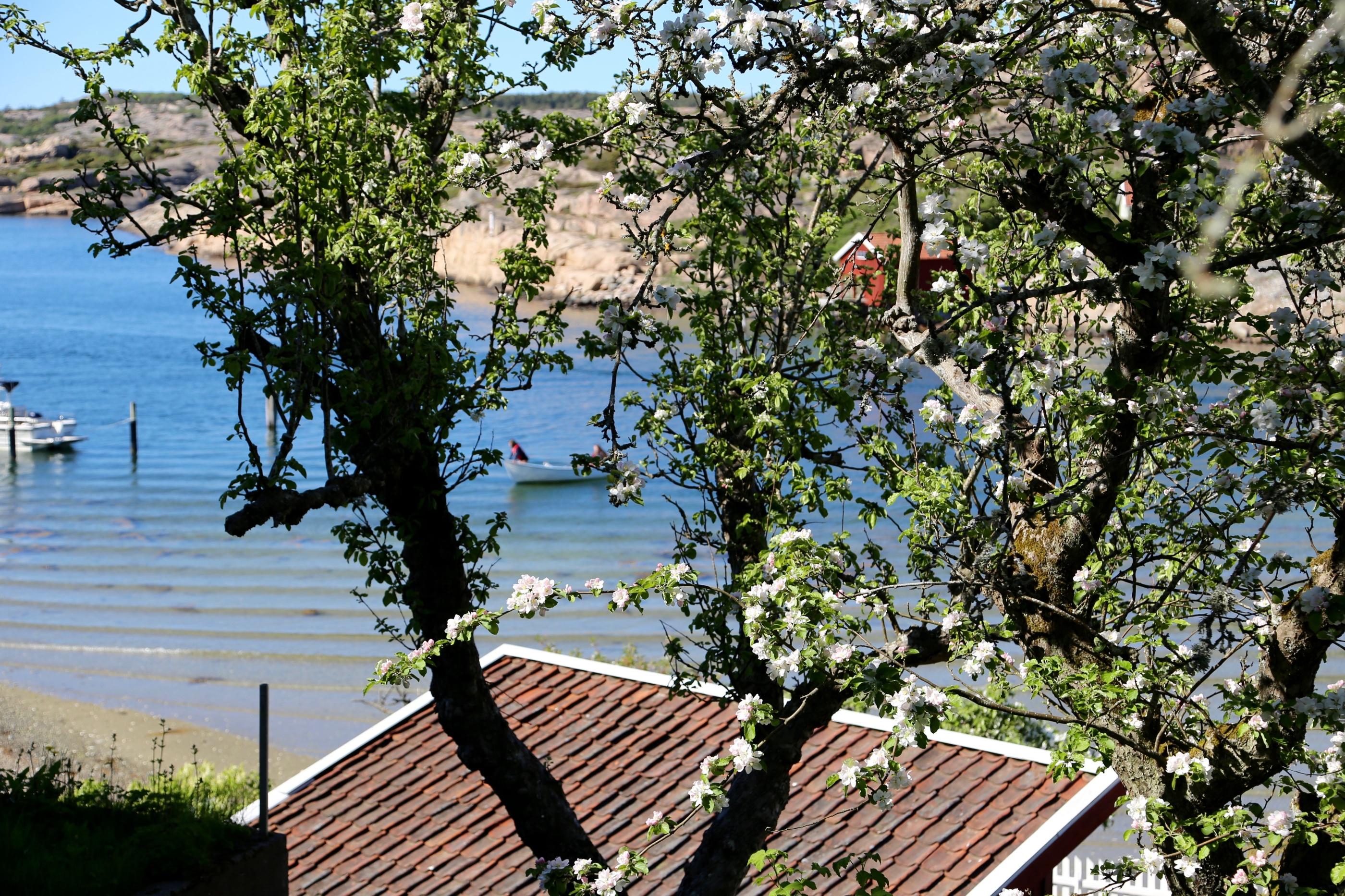 Utsikt från Everts hus.