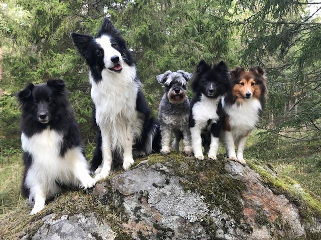 Flockbild hösten 2019. Lykke, Garvin, Daisy, Lova, Ester