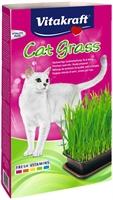 Kattgräs - Kattgräs
