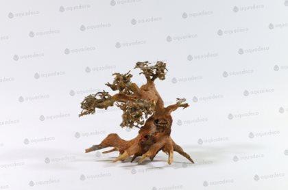Bonsaiträd S