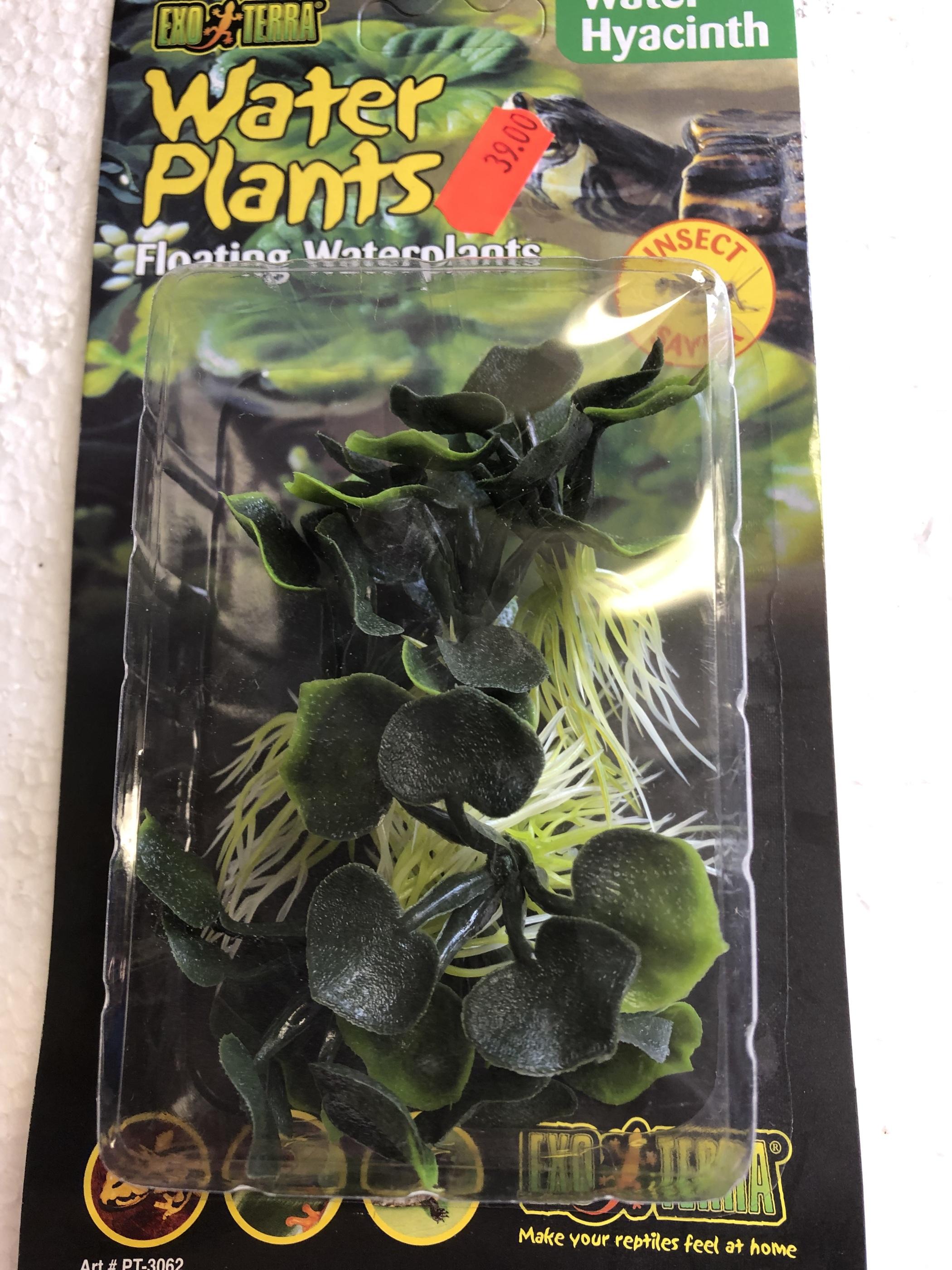 Hyacinth flytväxt