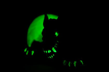 Zombie dog rising