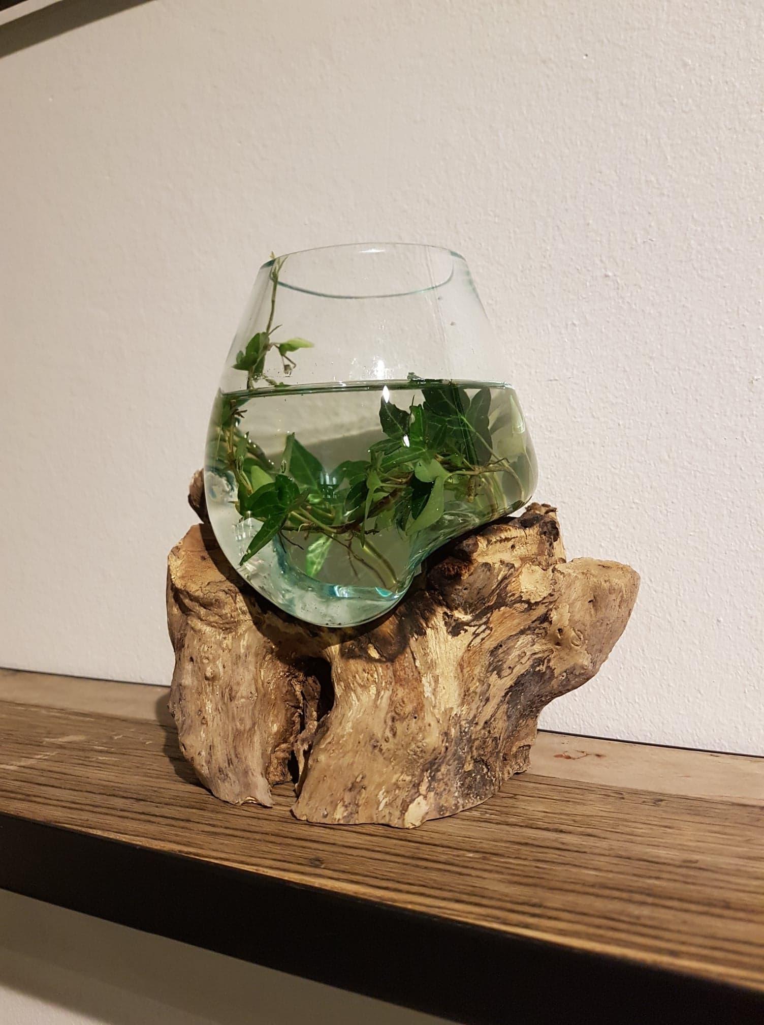 Glas på trädrot