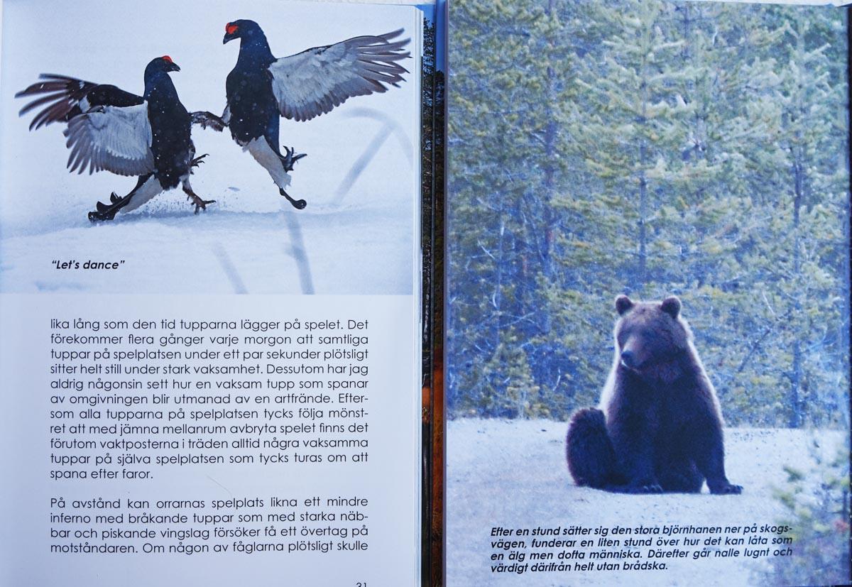 Björnar stora tuppar