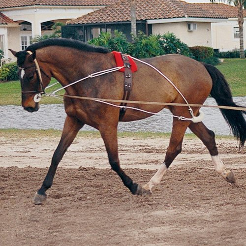 pessoa_lunging system