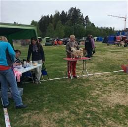 Söndag på SSTS special / Sunday at SSTS specialty. Domare / Judge Åsa Andersson.