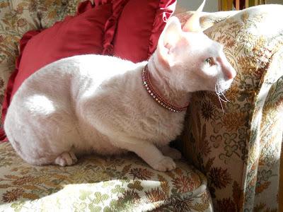 Bea i Prissy Pinkhalsbandet -stl Small