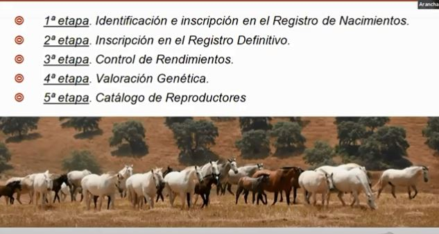 Etapp 1. Identifiering och inskrivning i födelseregistret, RN. Etapp 2. Inskrivning i det slutliga registret, RD. Etapp 3. Kontroll av prestationer. Etapp 4. Genetisk utvärdering. Etapp 5. Katalog med avelsdjur.