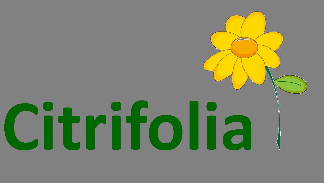 Citrifolia