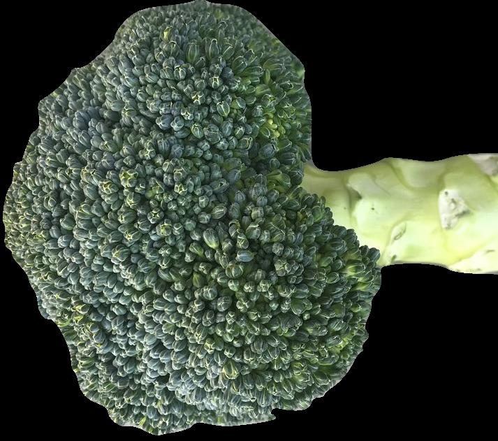 broccoli_transp