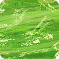 Bomullstyg Nature´s Pace green