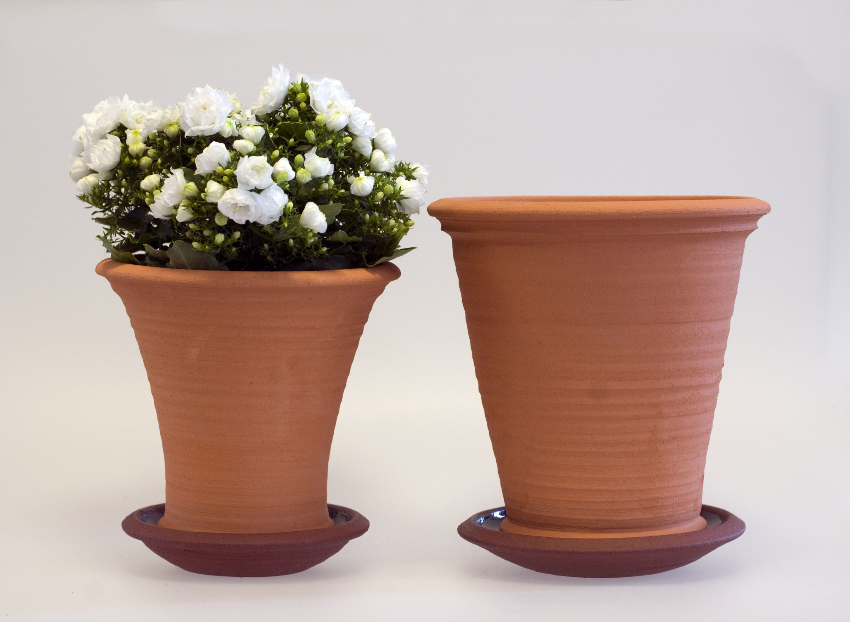 Terracottakrukor blomma