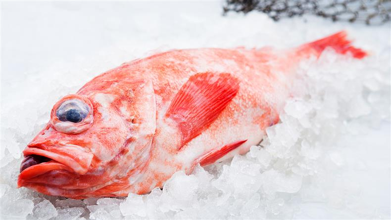 Kubgsfisk