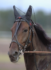 En av många betydelsefulla hästar under Rogers tränarkarriär, Giant Diablo
