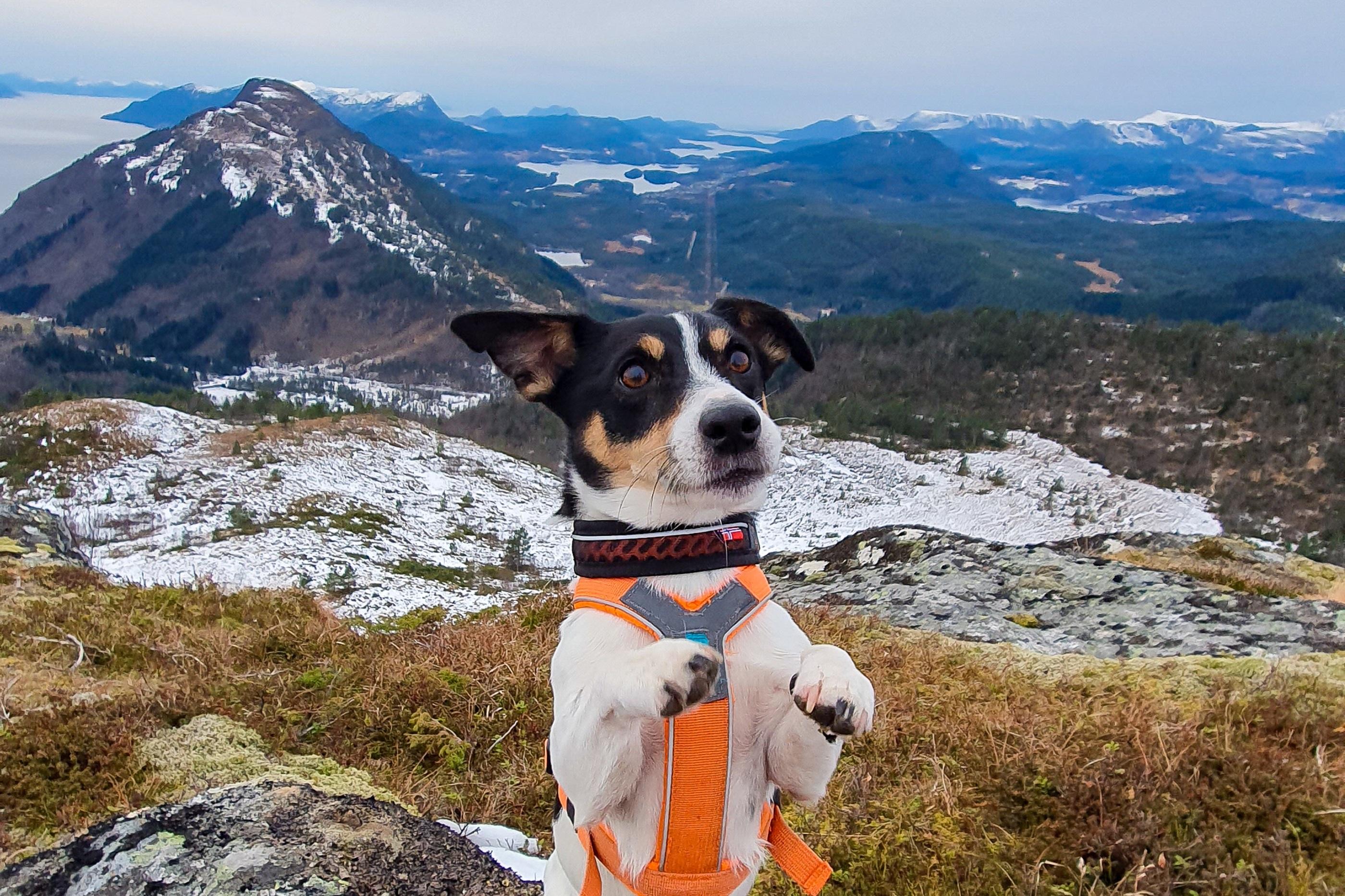 nonstopdogwear_b2b_Line Harness 2019, Rock Collar 2019_20191124_135203 (1)_2