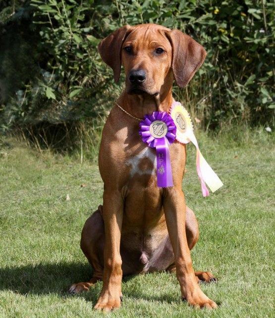 Ghali Excellent Jaiden BOB puppy
