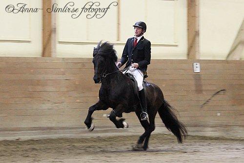 Prins från Knutshyttan, total bedömning 8,81 och han är hingsten med världens näst högsta BLUP på 129, foto Anna Helgesson.