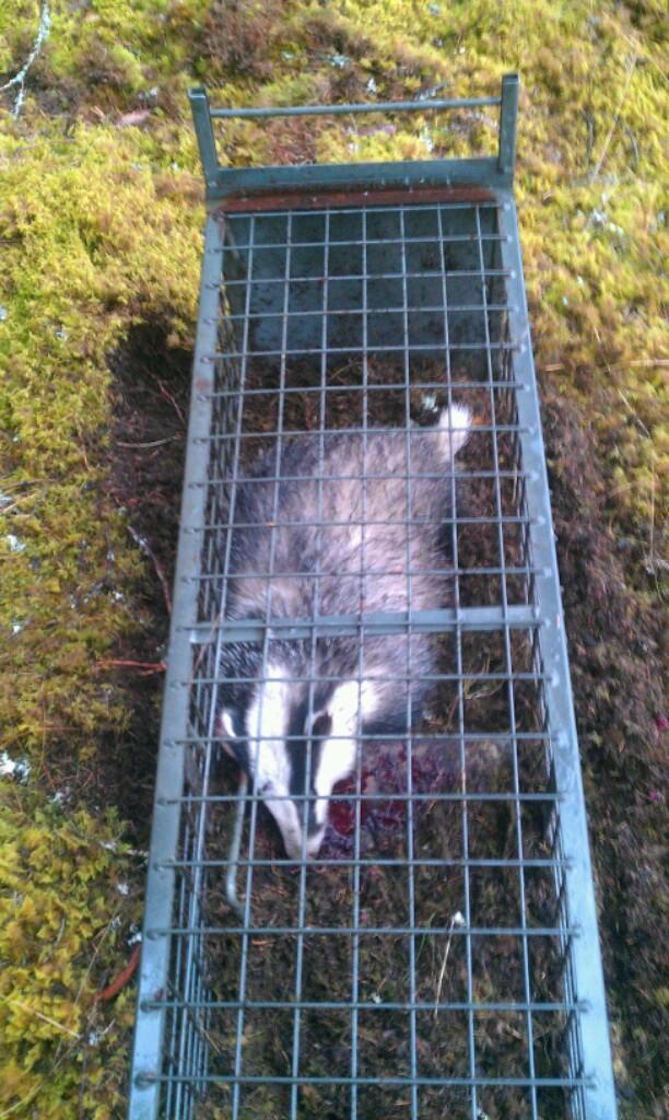 Crille kan även fånga andra djur också!