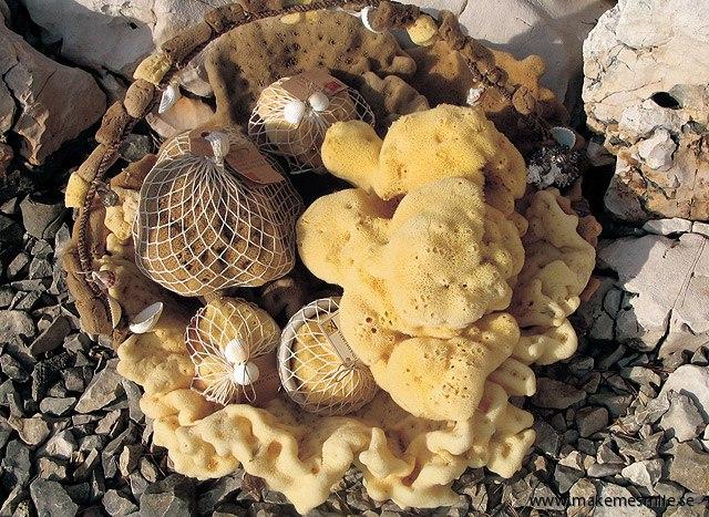 Havssvampar i olika stadium