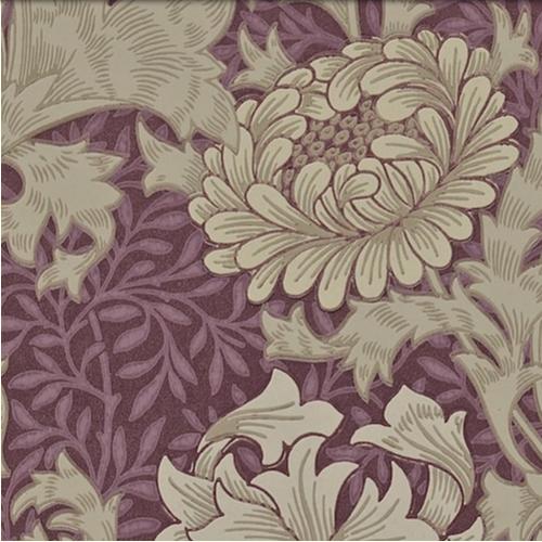 Chrysanthemum Lila L